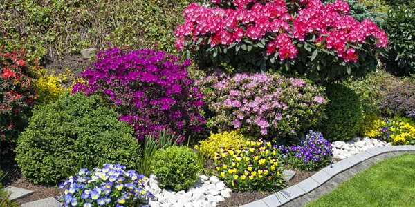 How to choose plants for landscaping home design lover for How to plant bushes in front of house