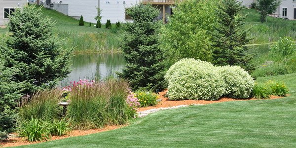 How to choose plants for landscaping home design lover for Choosing plants for landscaping