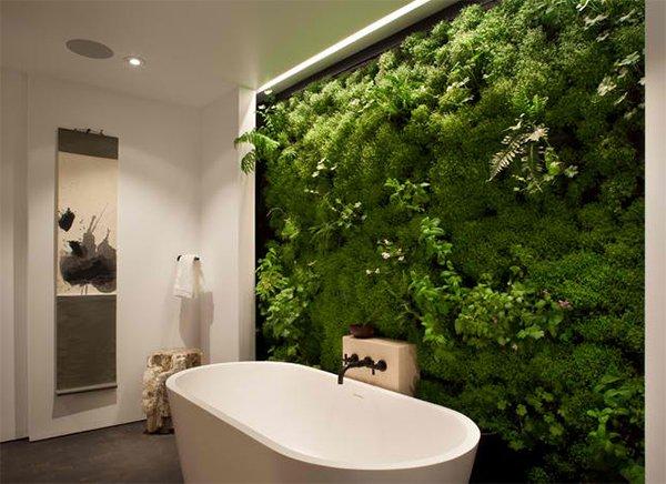 various wall plants