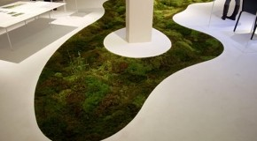 Grow a Moss Carpet Inside Your Very Home