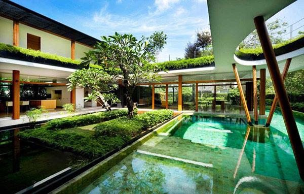 courtyard pool tree