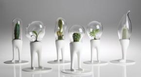 Domsai: Creative Cactus Planters With Legs
