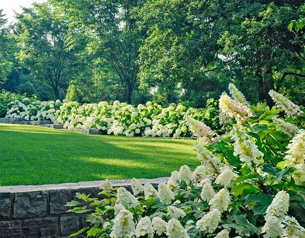 20 ways to landscape with shrubs home design lover for Garden designs with hydrangeas
