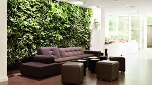 indoor plants tips