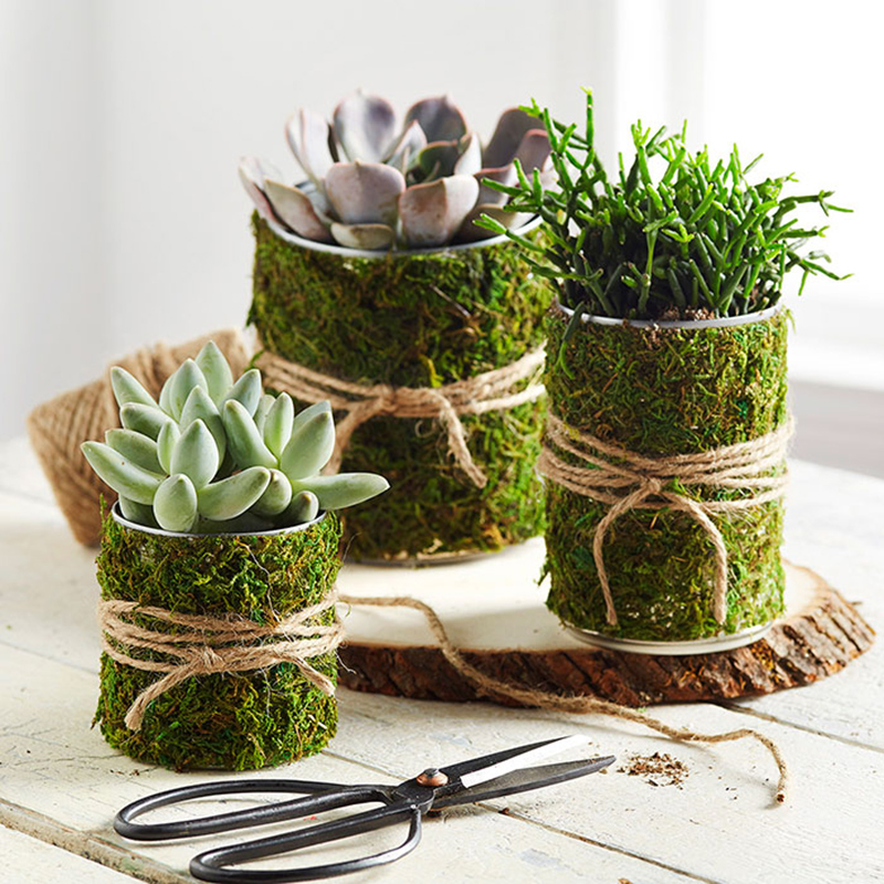 Moss-Wrapped Soup Can Organizer