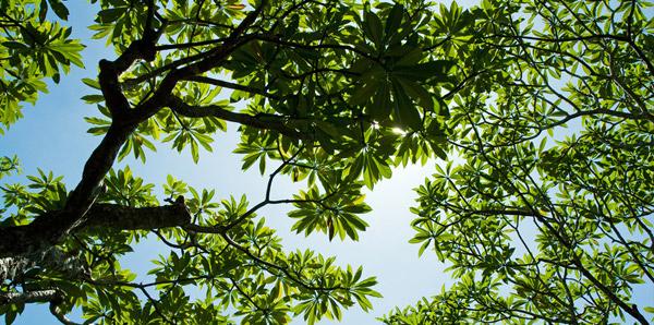 Plant tall trees