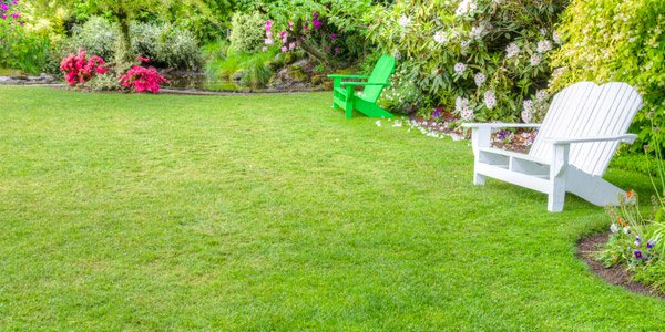 How To Choose Plants For Landscaping Home Design Lover