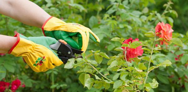 Prune your plants
