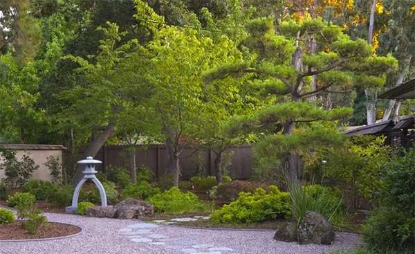 tree landscape design