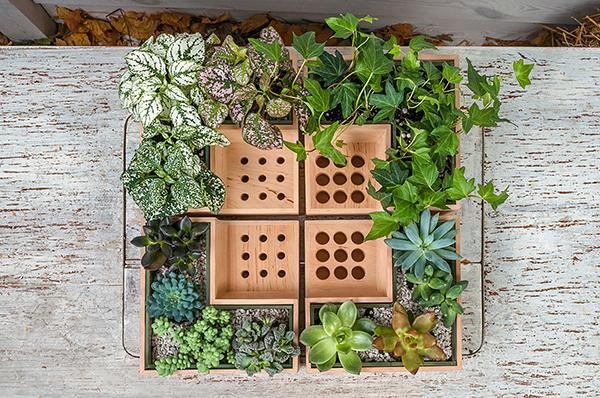 Eco Pot