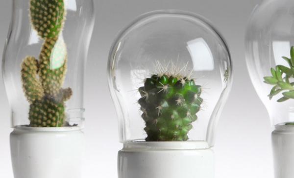 Creative Cactus