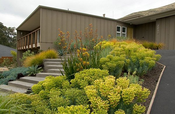 plant hedges