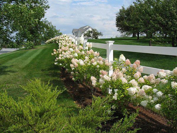 white flower fence