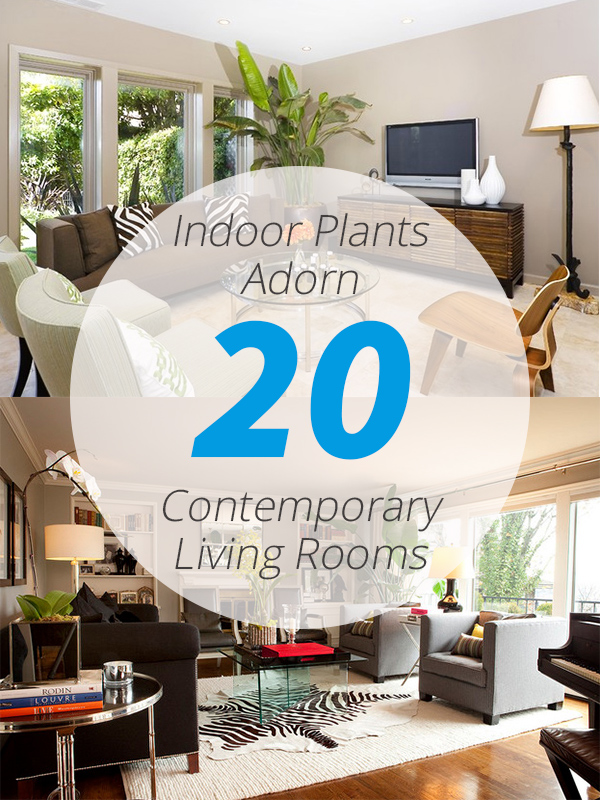 indoor plants contemporary living room
