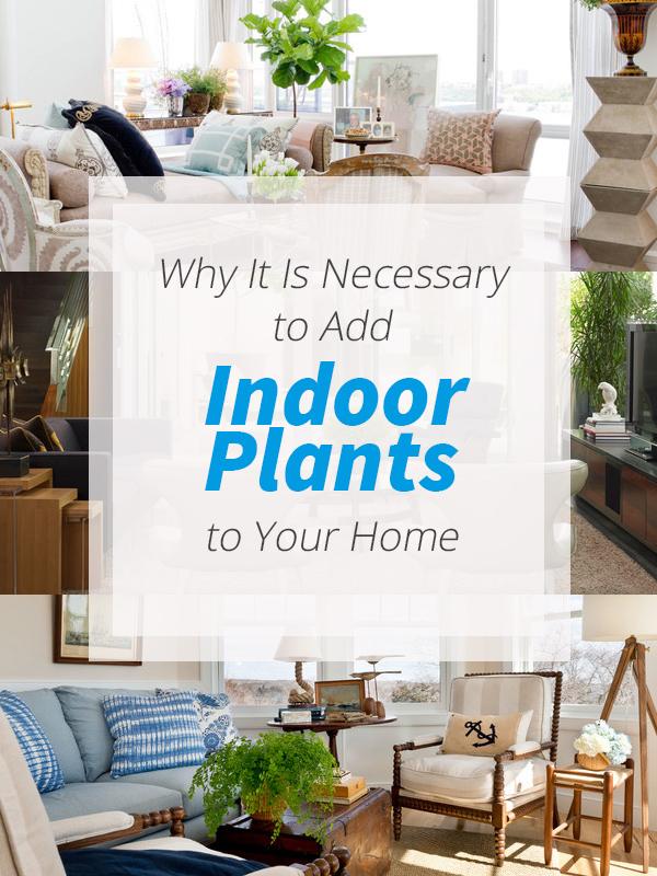 importance plants