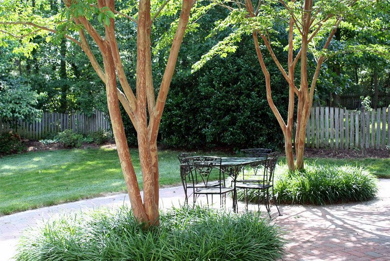 Soluciones para Shady Yards - Landscaping Network