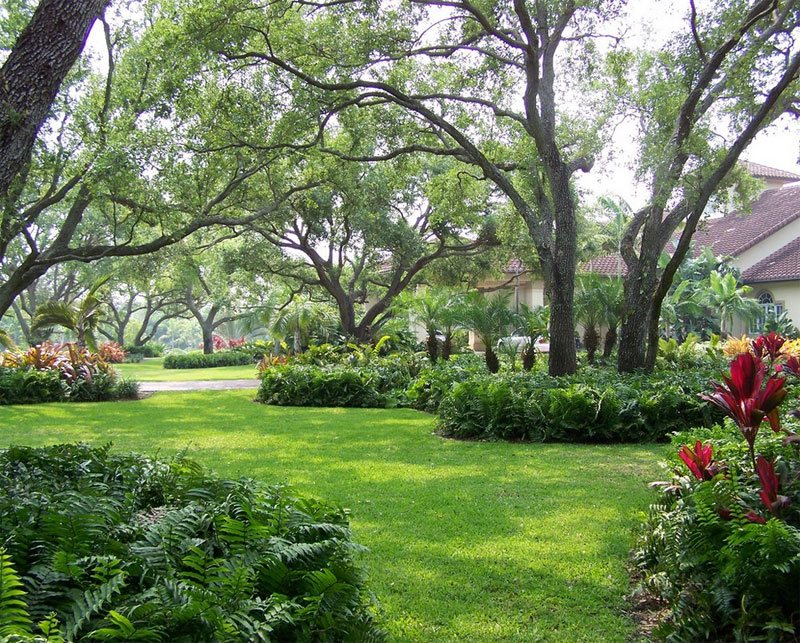 tree shade landscaping