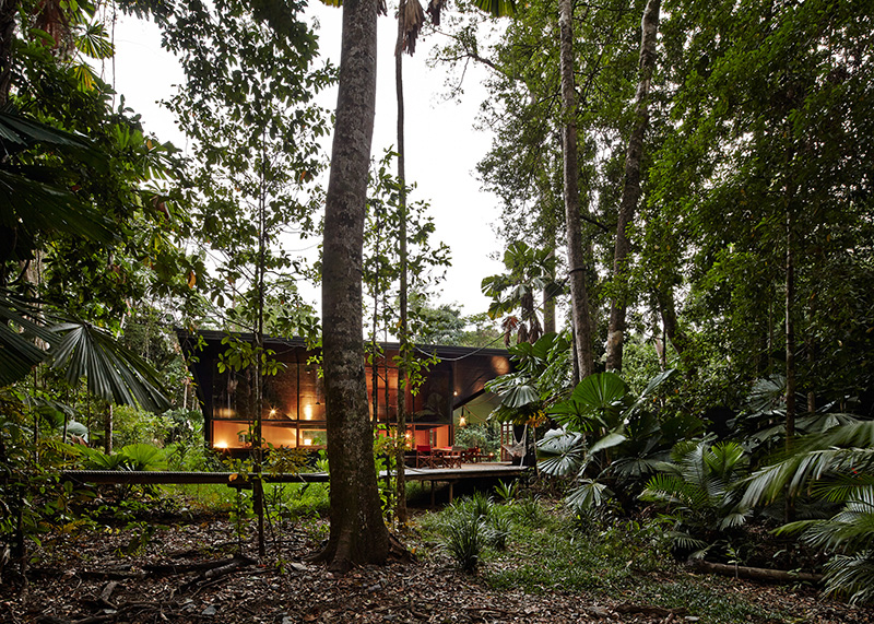 Cape Tribulation House forest