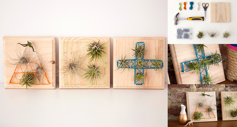 DIY Air Plants String Art