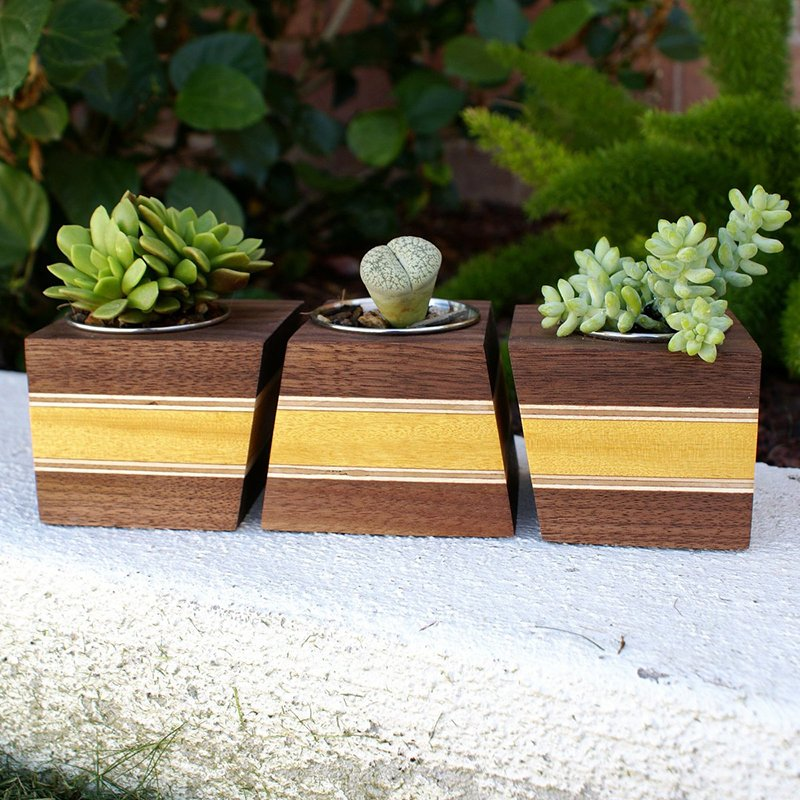 Modern Wood Walnut Boxcar Succulent Planters
