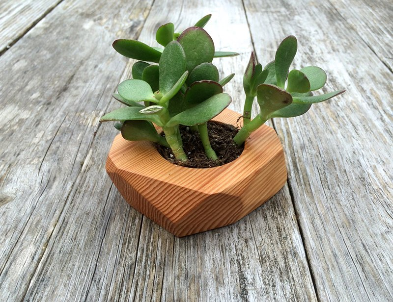 Geometric Wooden Succulent Planter