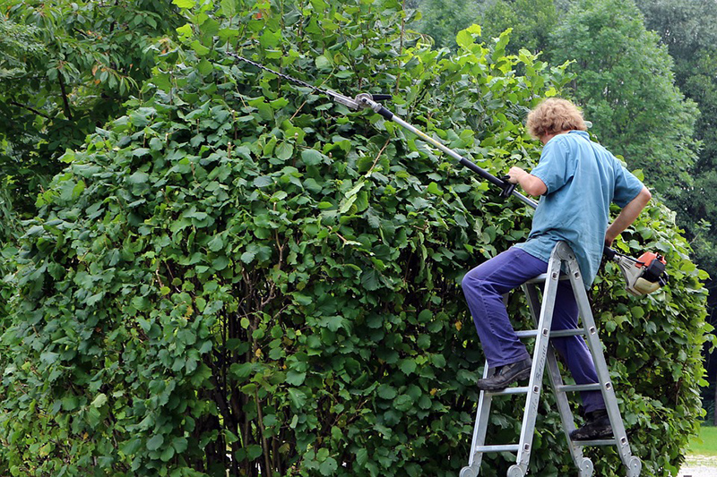 Prune trees and trim shrubs